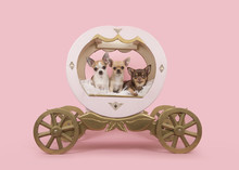 Three Chihuahua Dogs In A Wooden Coach On A Pink Background