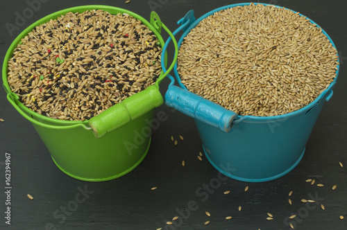 Fotografía  food for birds, seed mixture, a green bucket with seed mix and a blue bucket wit