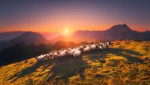 Flock Of Sheep In Saibi Mountain
