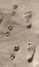 Human And Dog Footprints In Sand On Beach