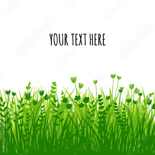 Summer green grass background for text. Vector eco, nature