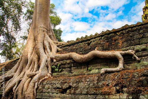 фотография  Ta Prohm is the modern name of the temple at Angkor, Siem Reap Province, Cambodi
