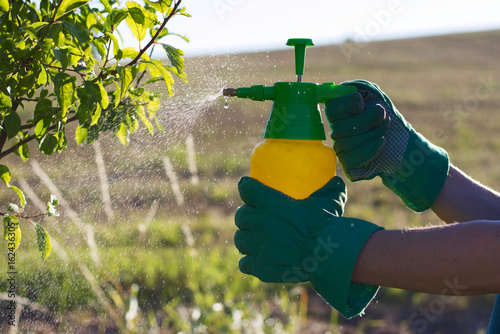 Fotografía  Woman with gloves spraying a leaves of fruit tree against plant diseases and pests