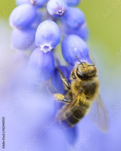Staande foto Bee A bee on a purple flower.