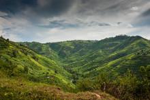 Bwindi Impenetrable Forest Mountain Gorillas, Uganda