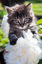 Cute Funny Kitten Is Sitting O...