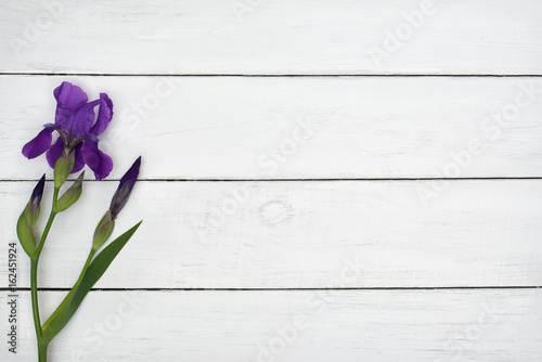 violet flower on white wooden table