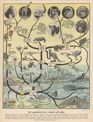 FototapetaScience - Evolution. Date: 0 - 1923