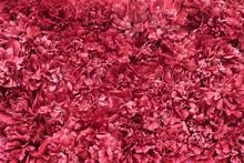 Red Flower Petals Texture Background
