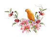 watercolor painting with bird and flowers, on white background
