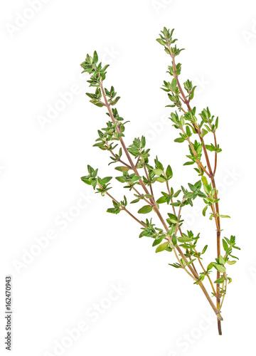 Fototapeta Thyme sprigs isolated on a white background obraz