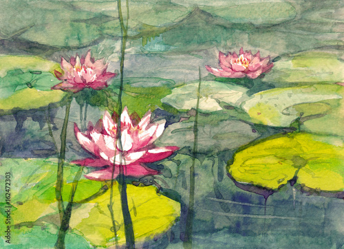 różowa lilia wodna akwarela ilustracja