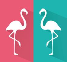 Two Beautyful Flamingo Vector ...