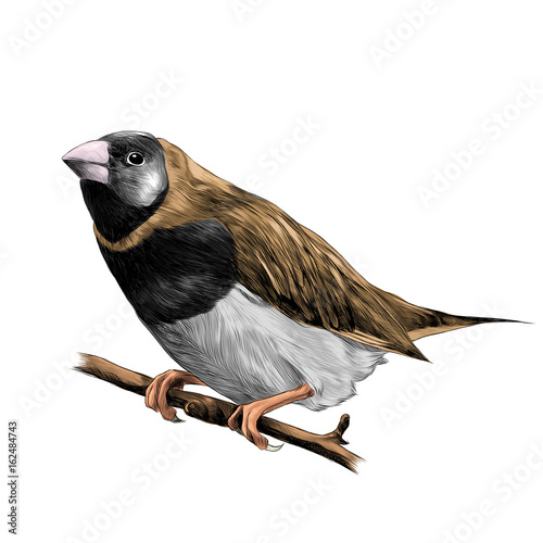 Photo bird of finches sitting on a branch of a tree sketch vector graphics color drawi