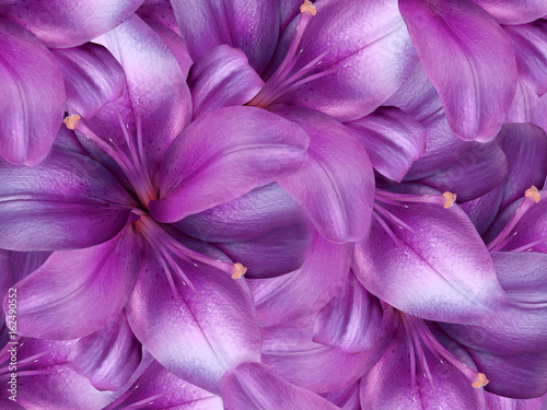 Foto op Canvas Bloemen lily flowers. bright pink background. floral collage. flower composition. Nature.