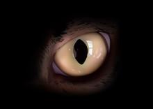 Cats Eye In Macro View - Anima...