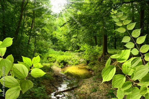 zielone-liscie-i-widok-na-maly-lesny-strumyk