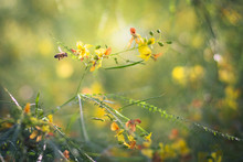 A Bee And Yellow Flowers