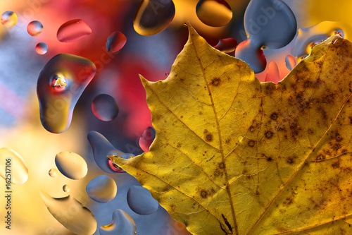 Fototapeta Autumn background with leaves and water drops