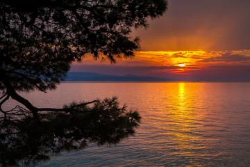 Fototapeta na wymiar sunset with pine trees in Brela