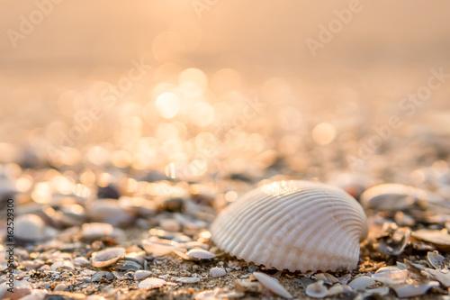 Obraz na plátně Sea shell on beach in the sunrise
