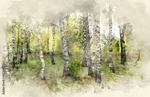Birch Grove. Watercolor background
