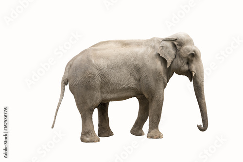Fotobehang Olifant Big elephant isolated on white background