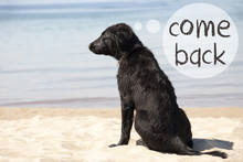 Dog At Sandy Beach, Text Come Back
