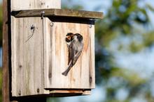 Birdhouse And Black-capped Chickadee