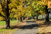 Driveway With Autumn Gold Color Trees And Fallen Leaves