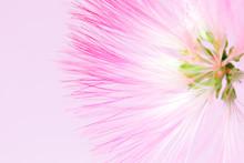 Defocused Blurred Pink Flower ...