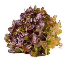 Red Lettuce On A White Backgro...