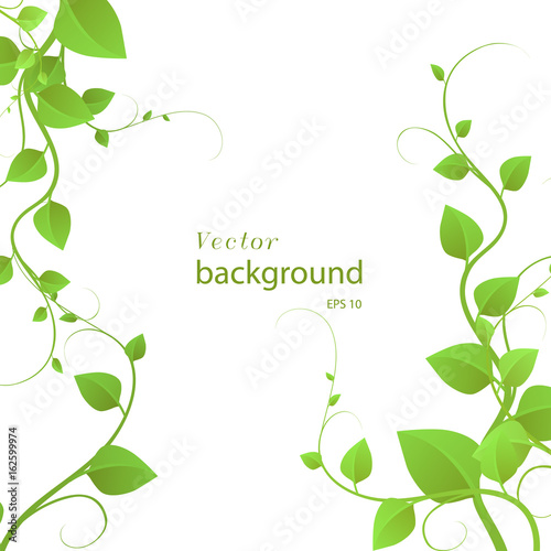 foliage on a white background, climbing plants, vector illustration Fototapete