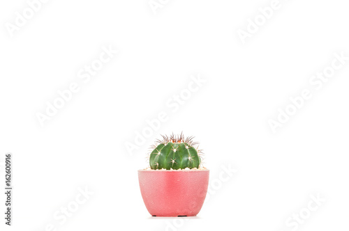 Aluminium Prints Cactus Cactus in the pot on white background.