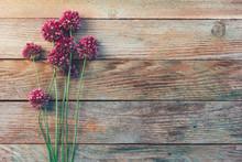 Wild Flowers Of Allium On A Wo...
