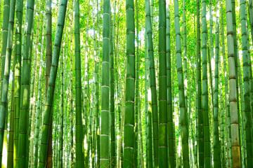 Fototapeta Bambus Bamboo forest of Arashiyama near Kyoto, Japan
