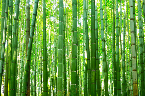Photo sur Toile Bamboo Bamboo forest of Arashiyama near Kyoto, Japan