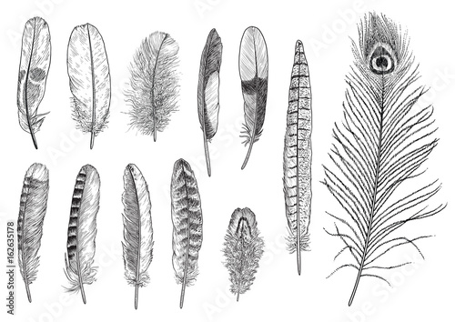 Collection of feather illustration, drawing, engraving, ink, line art, vector