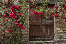 Roses And Old Door In Mombaldone