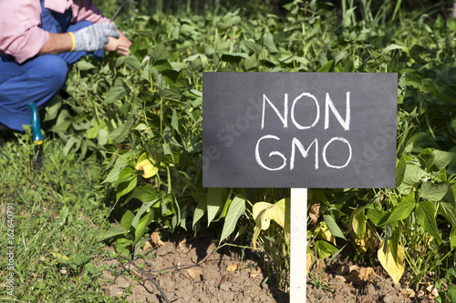 Photo  Farmer working in the non-genetically modified vegetable garden