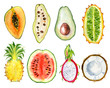 canvas print picture - tropical fruit slice watercolor hand drawn illustration