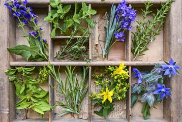 Fototapetafrische Gartenkräuter und Heilpflanzen sortiert in alten Holzfächern