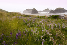 Oregon Coast, Bandon Beach On ...