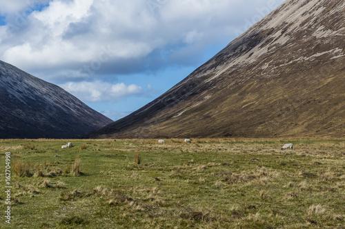 Sheep near Torrin Scotland Poster