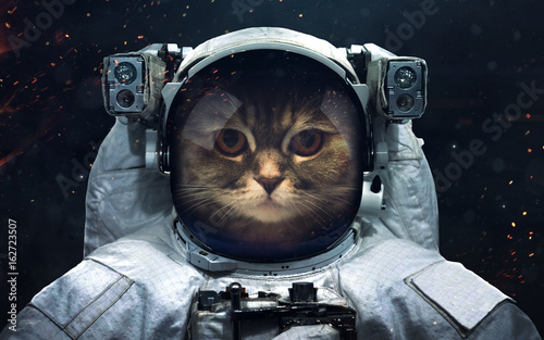 Science fiction space wallpaper with cat astronaut, incredibly beautiful planets, galaxies, dark and cold beauty of endless universe. Elements of this image furnished by NASA