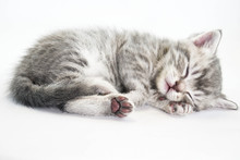 Kitten Is Sleeping Sweetly. Th...