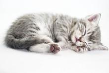 Kitten Is Sleeping Sweetly. The Kitten Lies Asleep