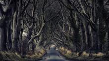 Path Through A Dark Forest.