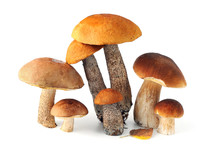 Group Of Different Bolete Mush...