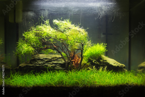 Photo Planted nano aquarium with a moss tree in the center